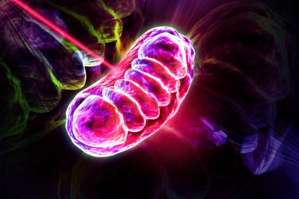 mitochondria-600x400